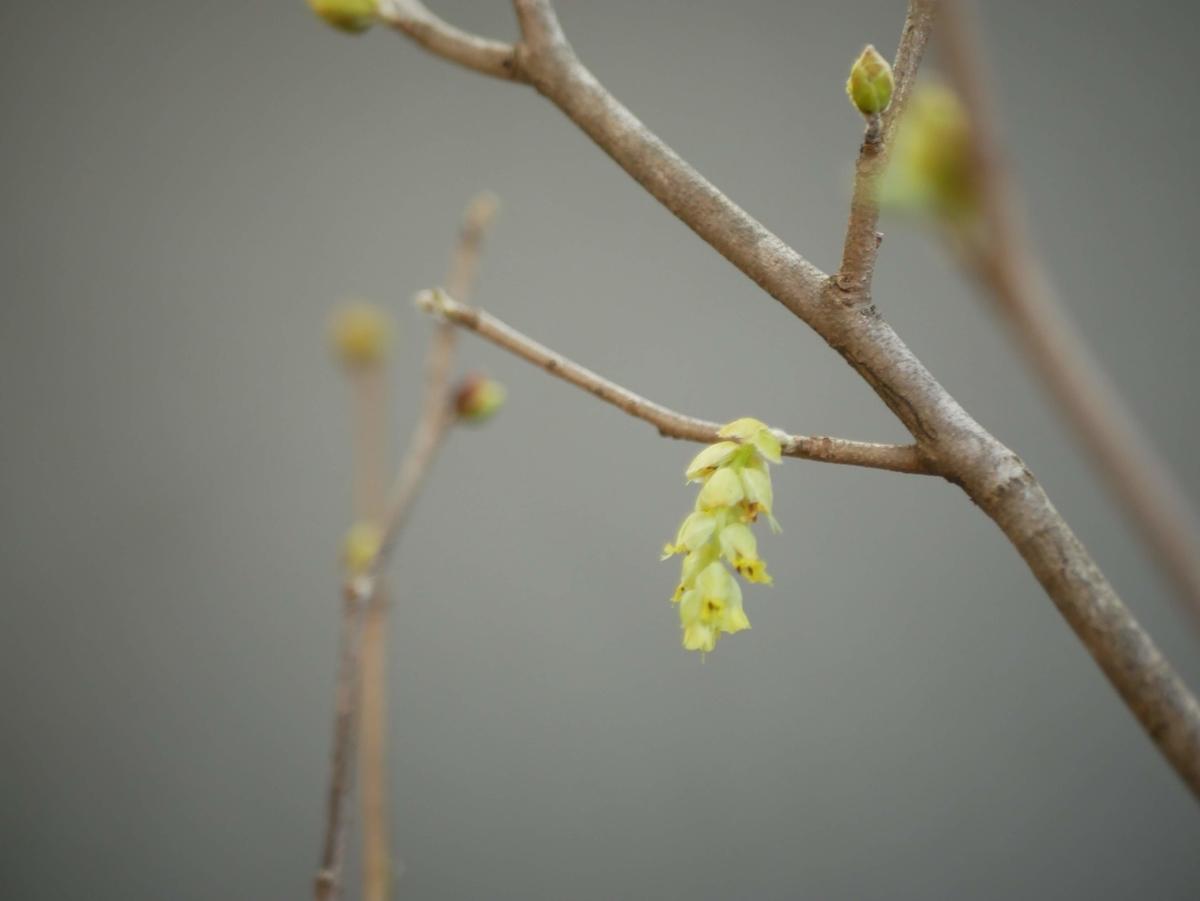 f:id:kika-treeflower:20210509152403j:plain