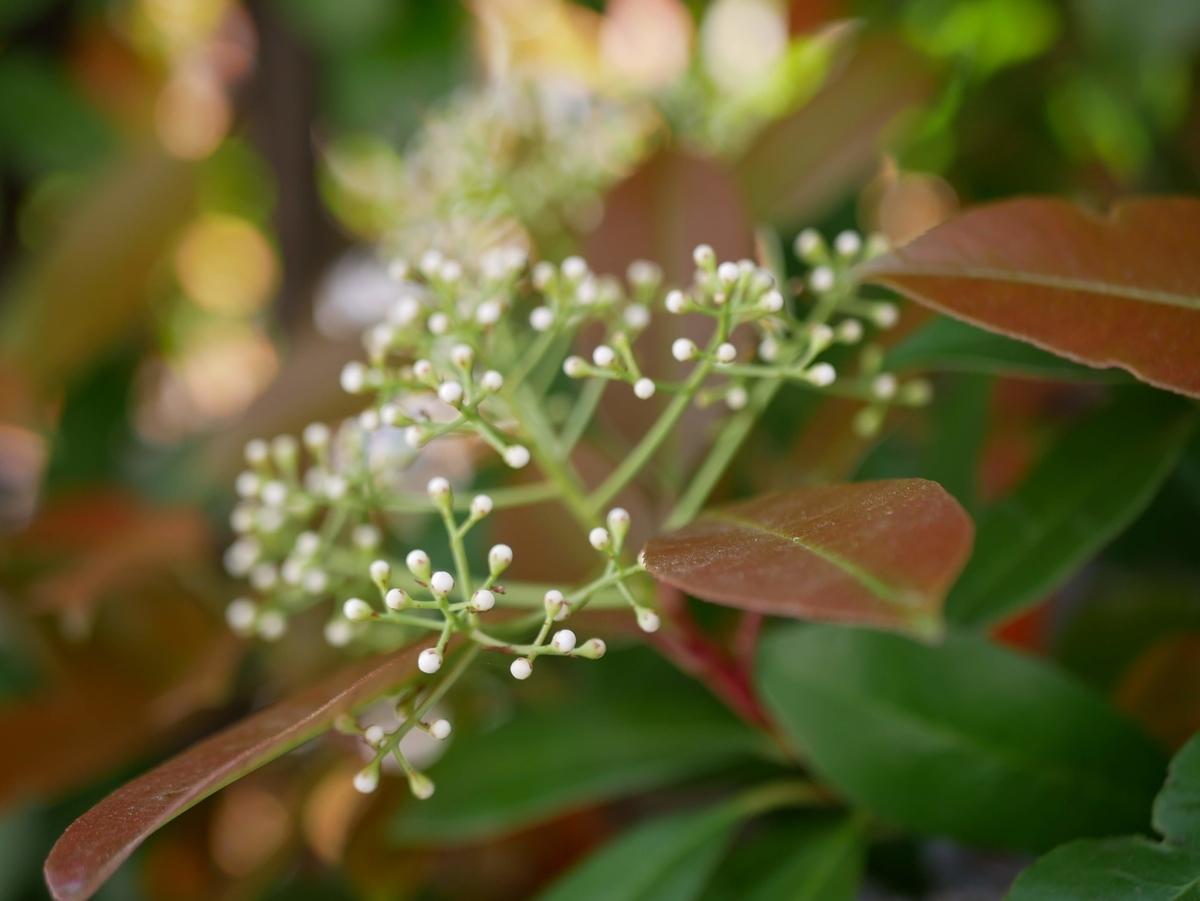 f:id:kika-treeflower:20210521083753j:plain