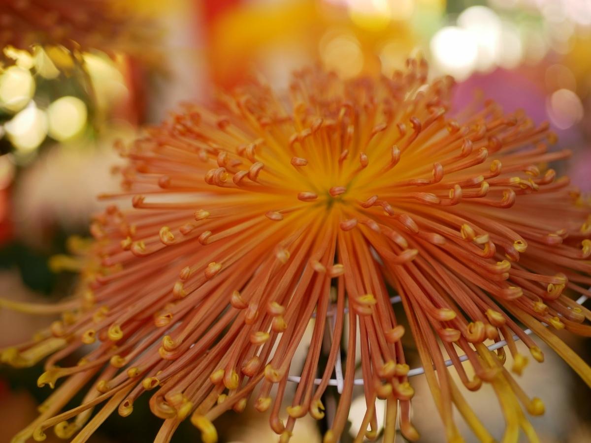 f:id:kika-treeflower:20210521085029j:plain