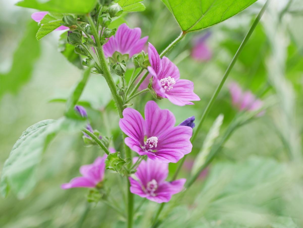 f:id:kika-treeflower:20210605161811j:plain
