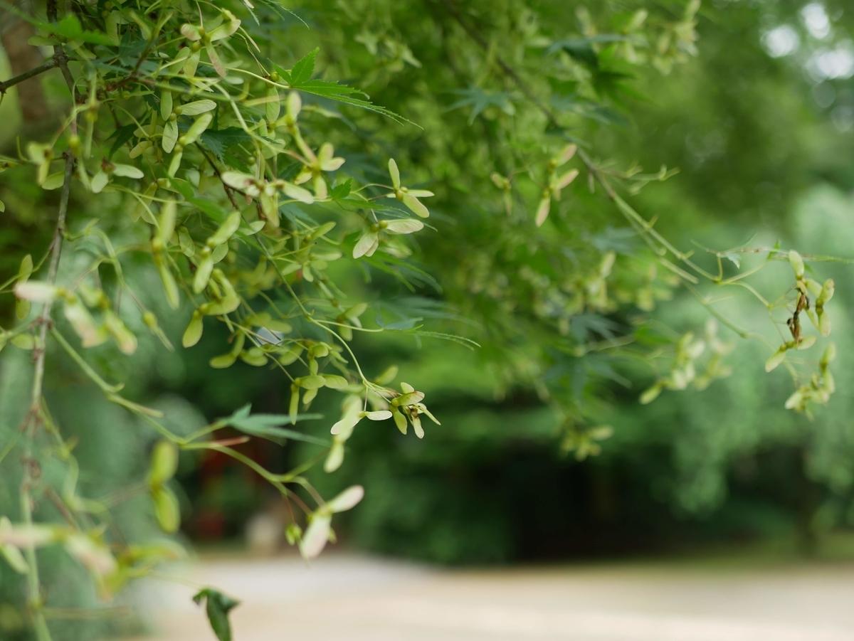 f:id:kika-treeflower:20210627180129j:plain