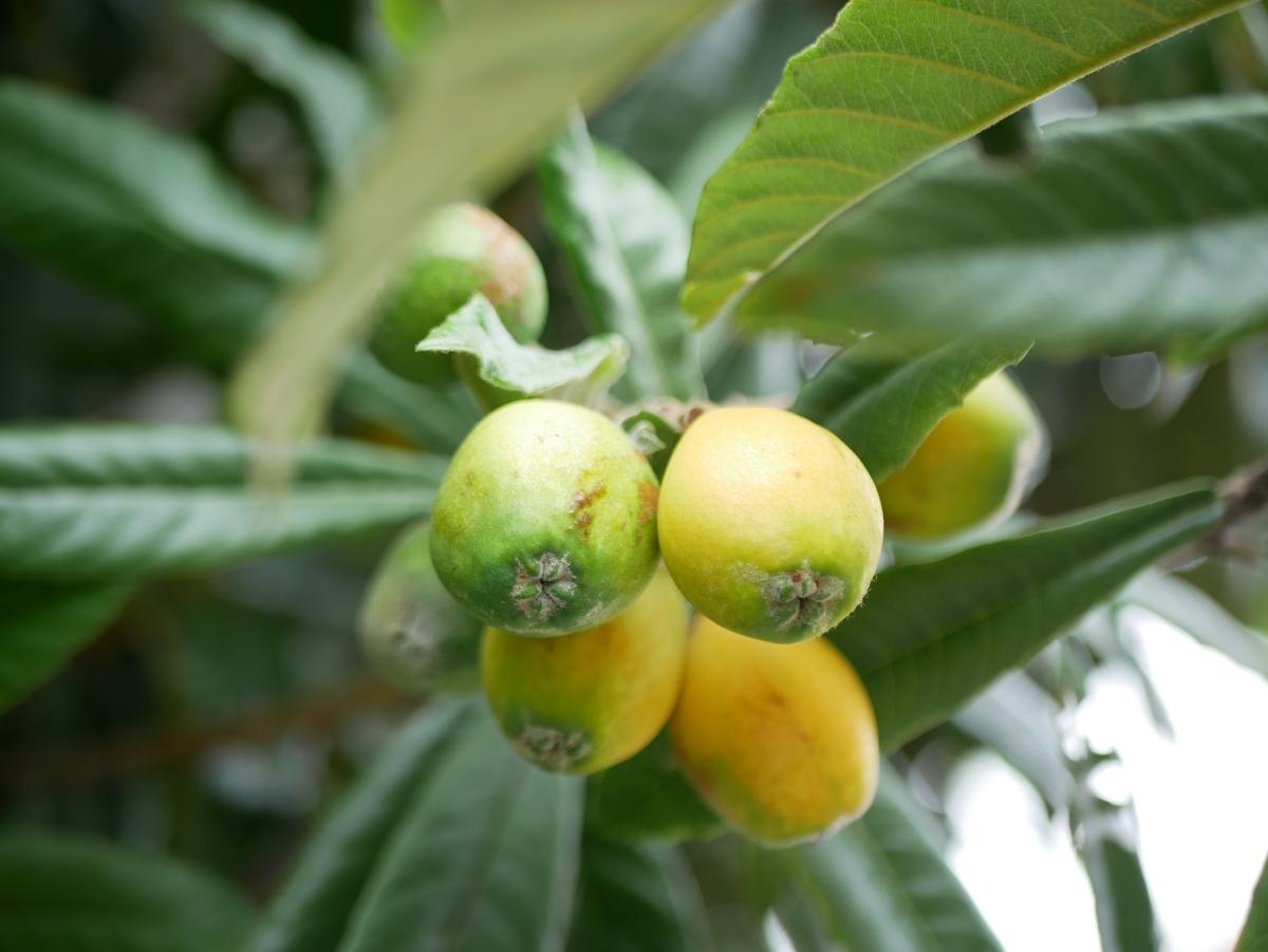 f:id:kika-treeflower:20210710194614j:plain