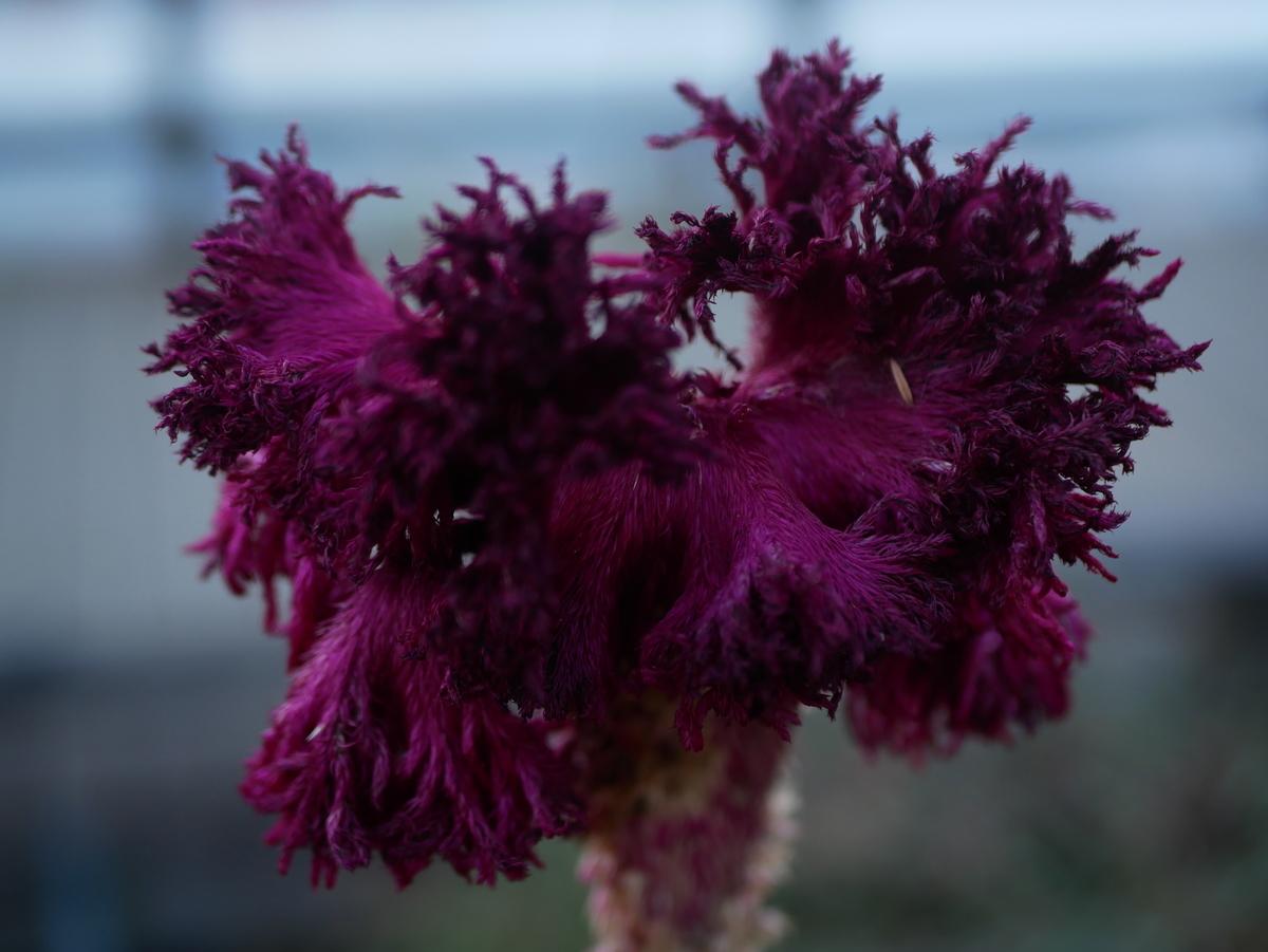 f:id:kika-treeflower:20210710204822j:plain