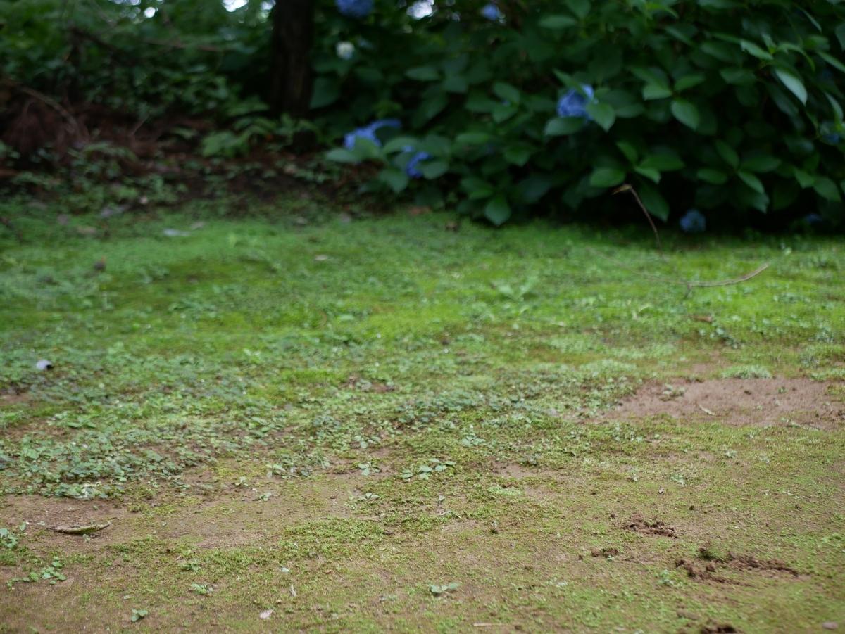 f:id:kika-treeflower:20210718123639j:plain