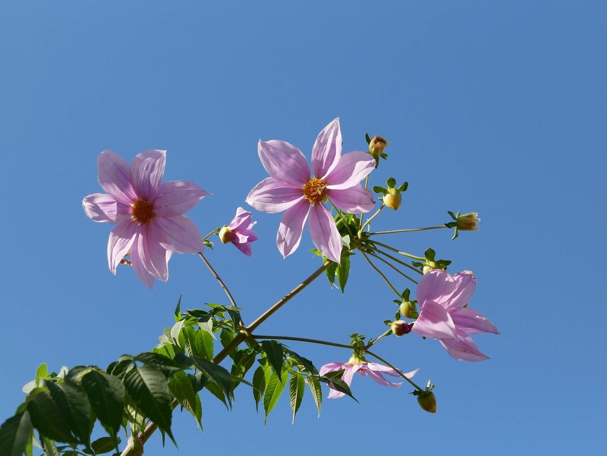 f:id:kika-treeflower:20210808174356j:plain
