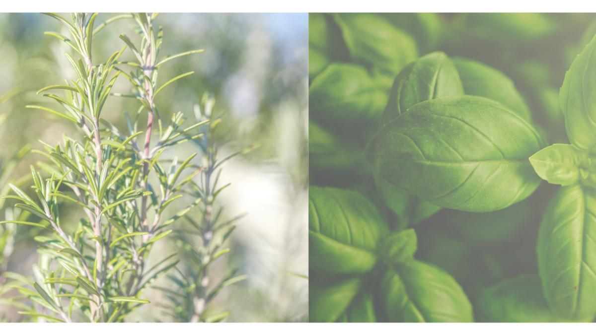 f:id:kika-treeflower:20211003094338p:plain