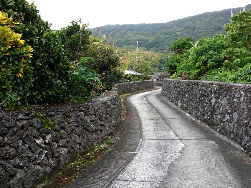 喜界島 国立公園 自然遺産登録へ1歩前進