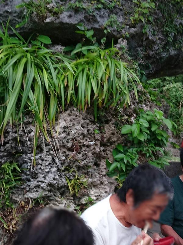 喜界島 隆起サンゴ
