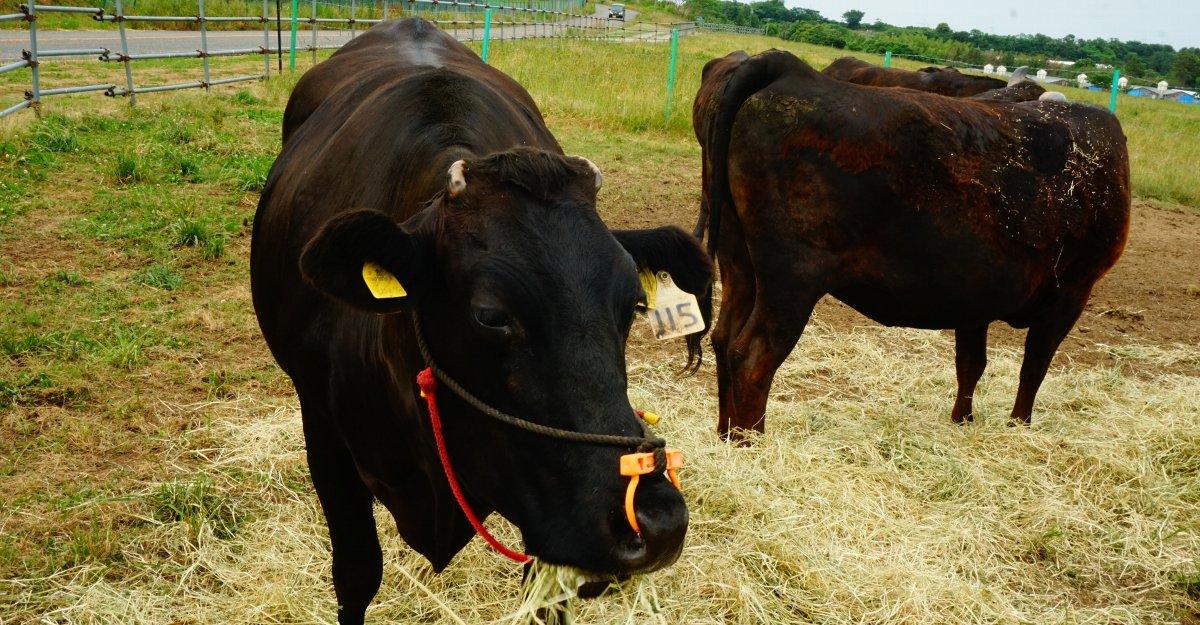 但馬牛・神戸牛の定義