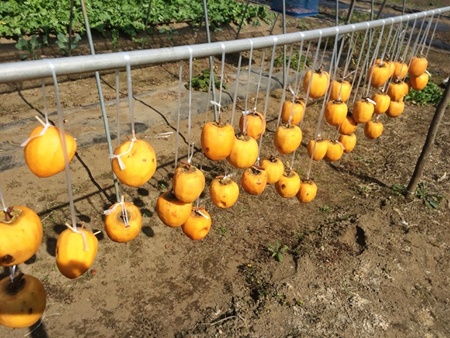 干し柿 作り方 干し方
