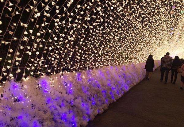 なばなの里 イルミネーション 光のトンネル 花回廊 おすすめ