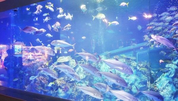 鳥羽水族館 サンゴ礁
