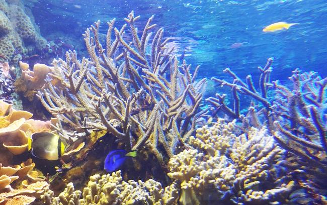 鳥羽水族館 サンゴ