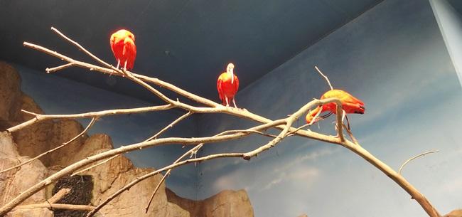 鳥羽水族館 カピバラ 鳥 魚