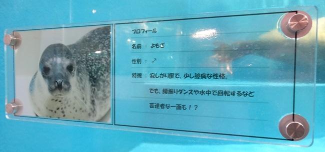 鳥羽水族館 ゴマフアザラシ よもぎ