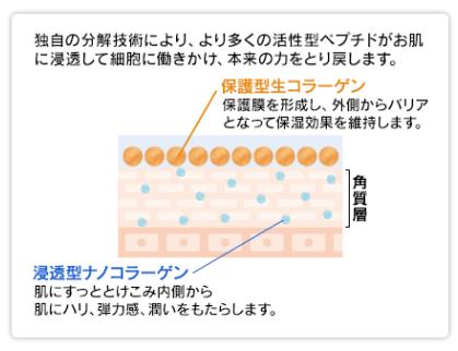 水溶性コラーゲンと加水分解コラーゲンの説明
