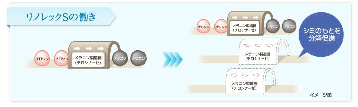 エクイタンスのホワイトロジーローションとホワイトロジークリームに使われている「リノレックS」はシミのもとを分解促進効果がある