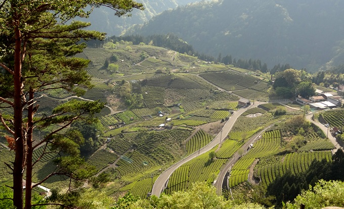 岐阜のマチュピチュ 天空の遊歩道にある絶景ポイントからの天空の茶畑
