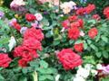 花の写真は難しいね