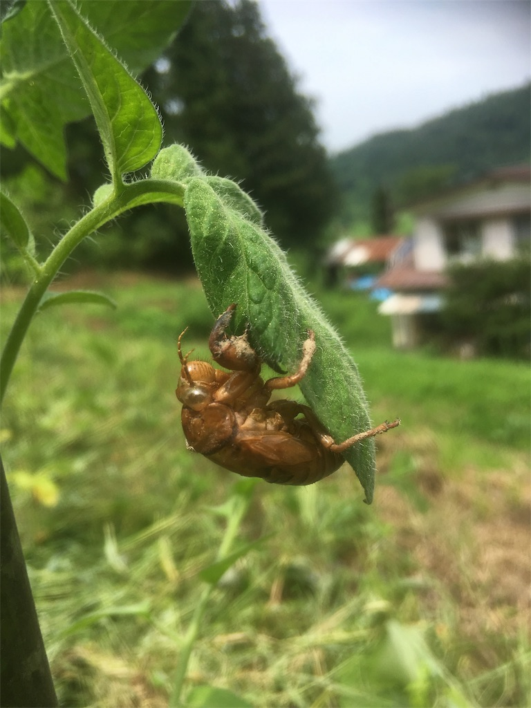 f:id:kikori-farm:20180801134632j:image
