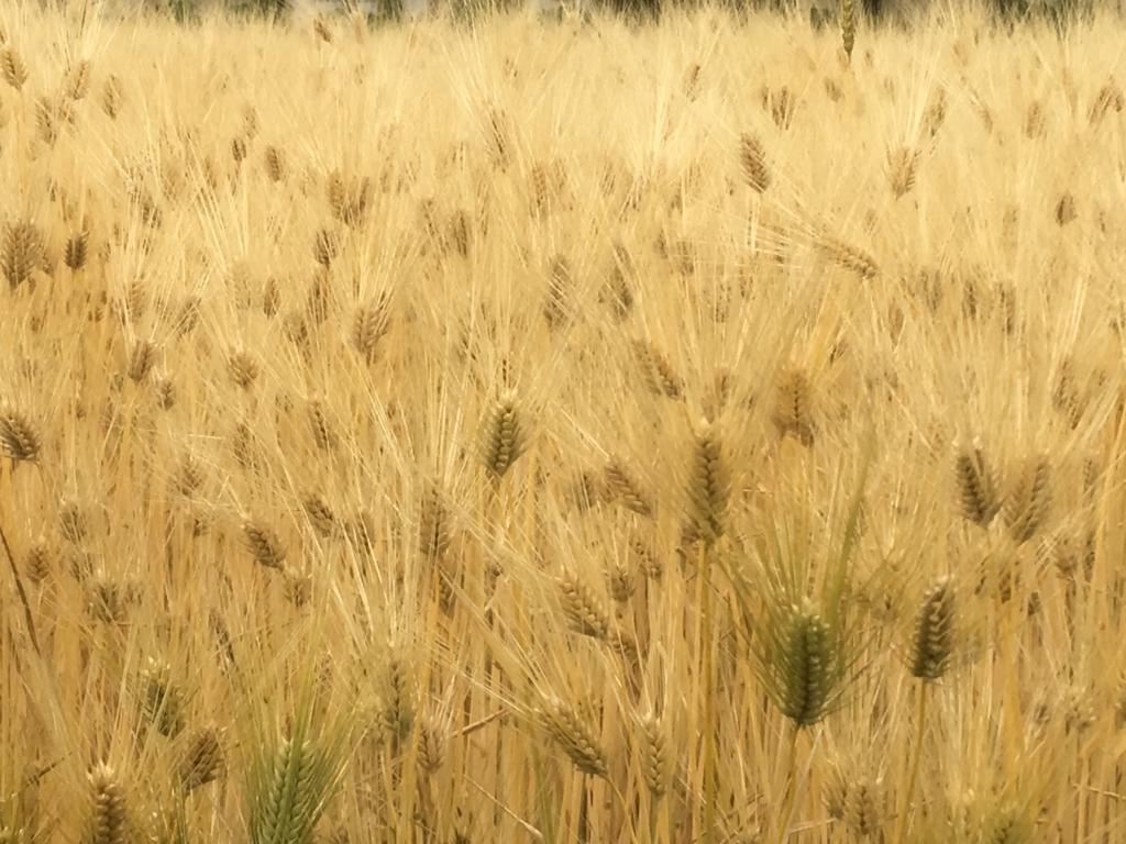 f:id:kikori-farm:20180807143844j:plain