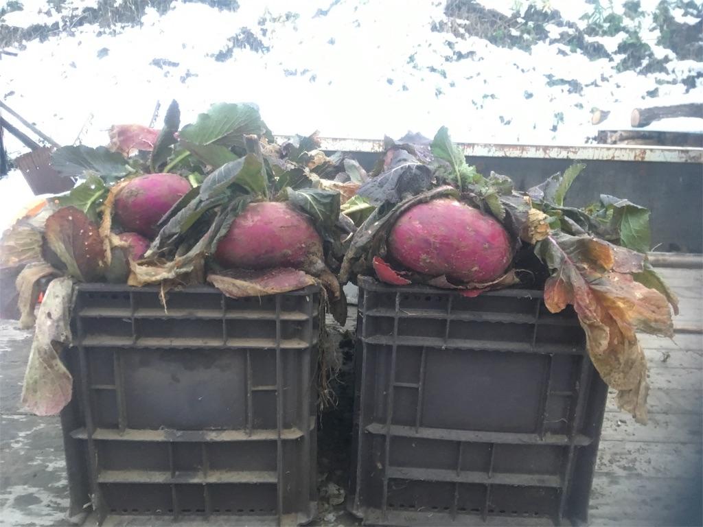 f:id:kikori-farm:20190321125738j:image