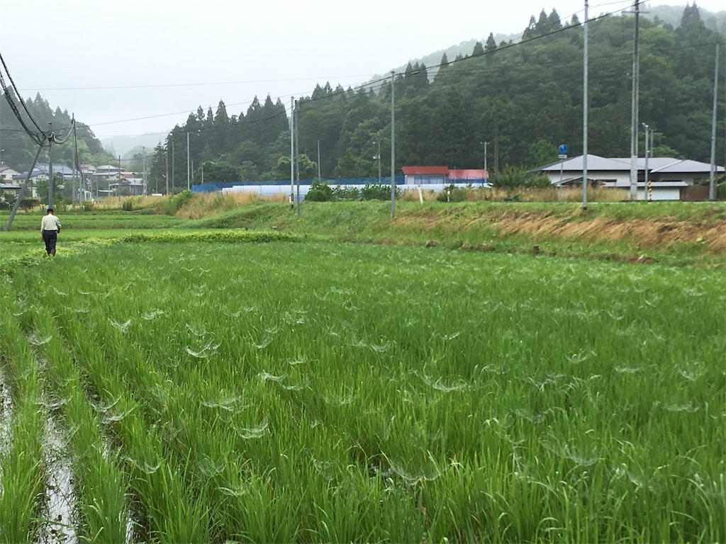 f:id:kikori-farm:20190721211518j:image