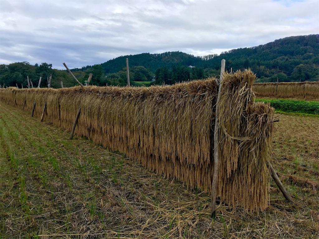 f:id:kikori-farm:20191103215916j:image