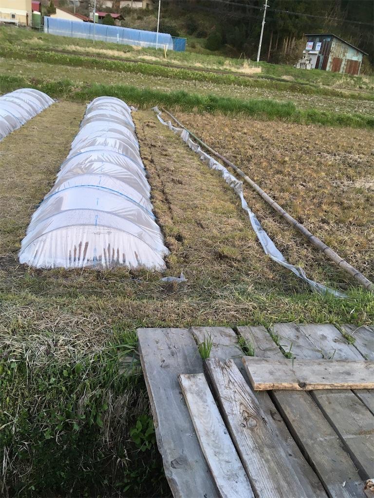 f:id:kikori-farm:20200427234114j:image