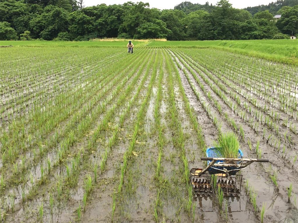 f:id:kikori-farm:20200626144655j:image