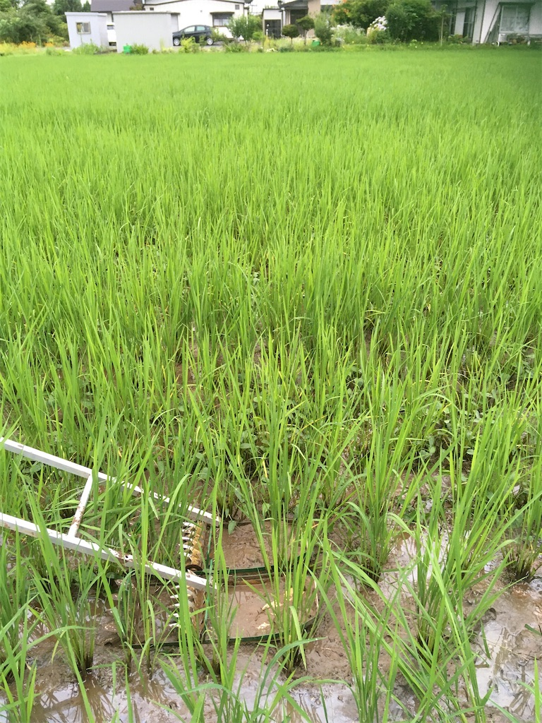f:id:kikori-farm:20200717124203j:image