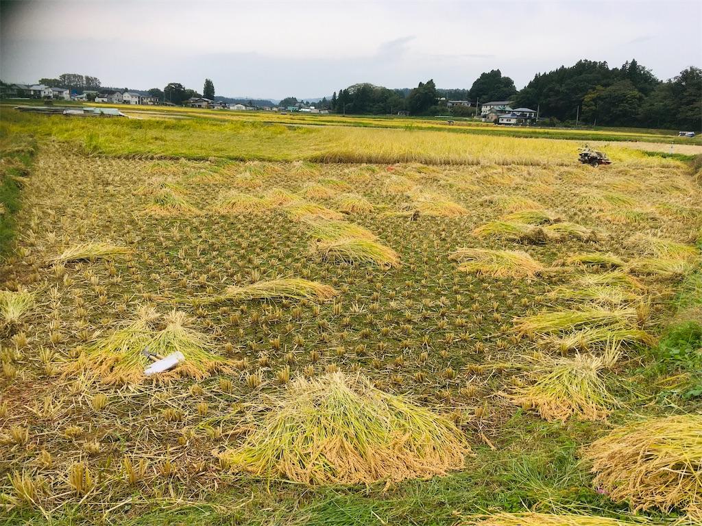 f:id:kikori-farm:20201003185841j:image
