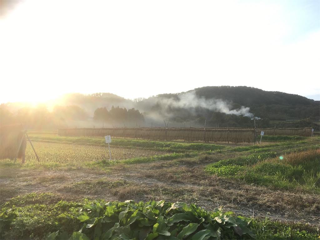 f:id:kikori-farm:20210727044836j:image