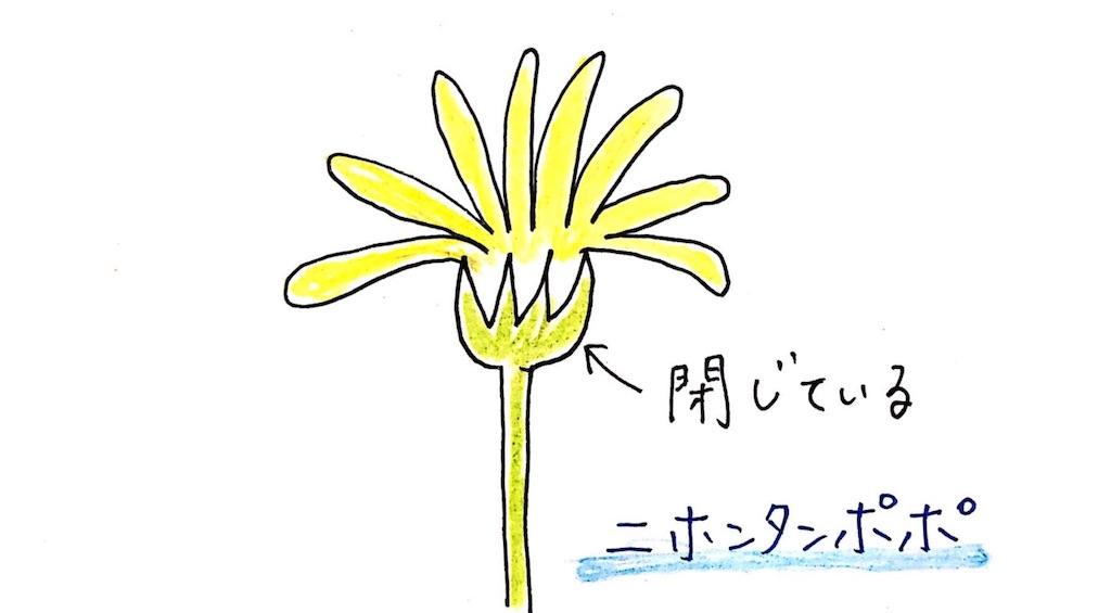 f:id:kikoricafe:20200506102745j:image