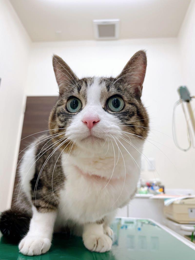 猫が診察台に乗っている写真