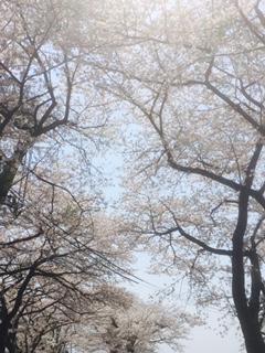 f:id:kikouryuuou:20170415092530j:plain