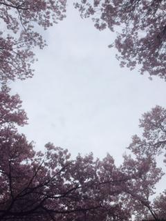 f:id:kikouryuuou:20170422103008j:plain