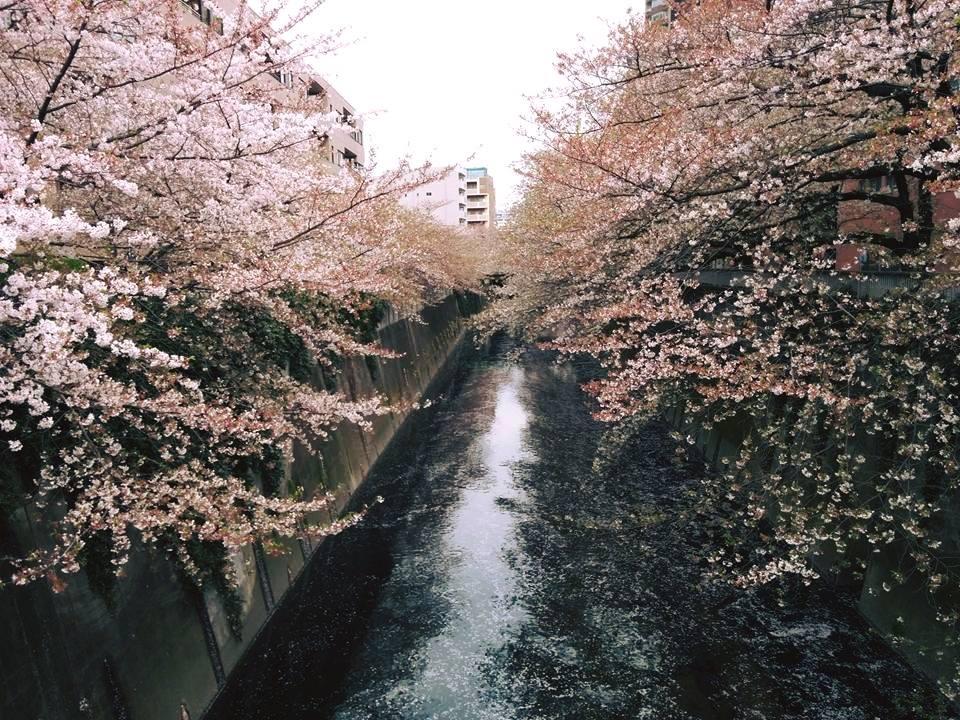 f:id:kikuchidesu:20160409154212j:plain