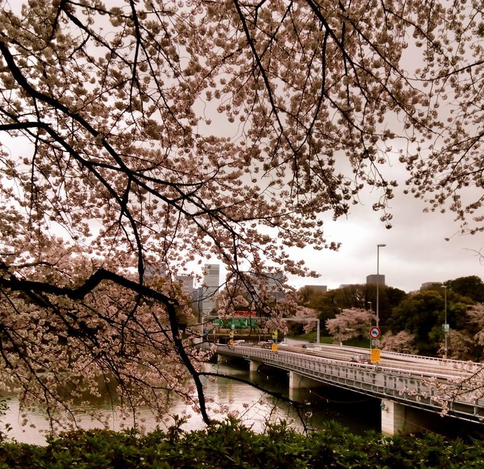 f:id:kikuchidesu:20170410204409j:plain
