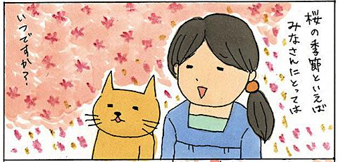 kikuike_sakura.png
