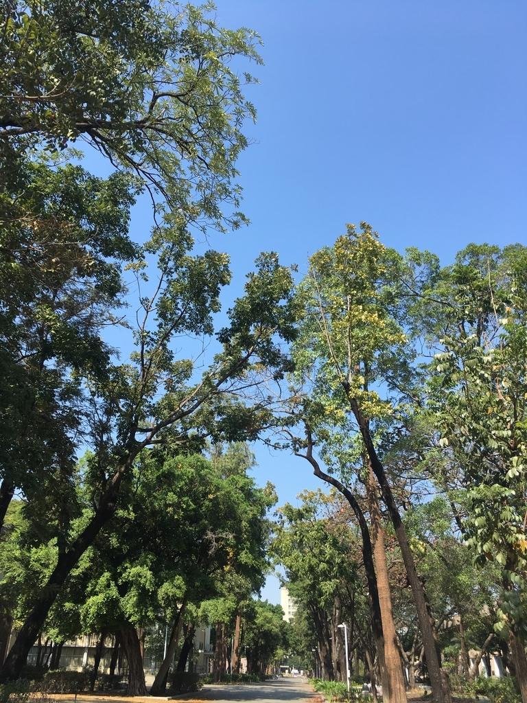 生い茂る木と葉っぱ