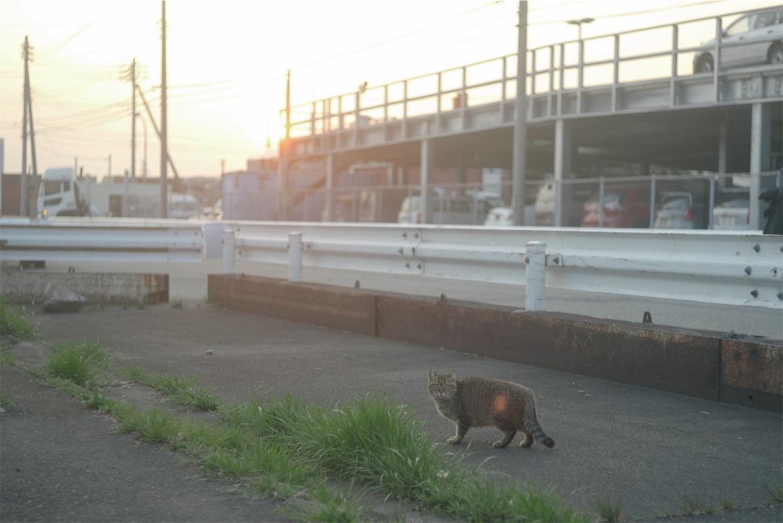 f:id:kikutabayashi:20200114124050j:image
