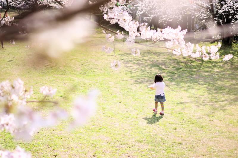 桜と娘の画像