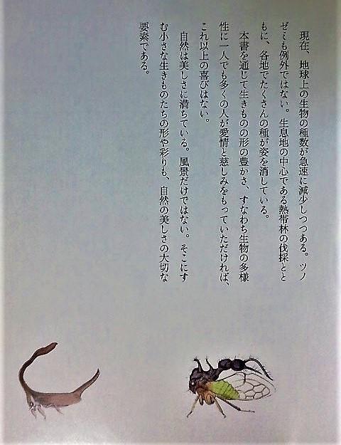 イメージ 10