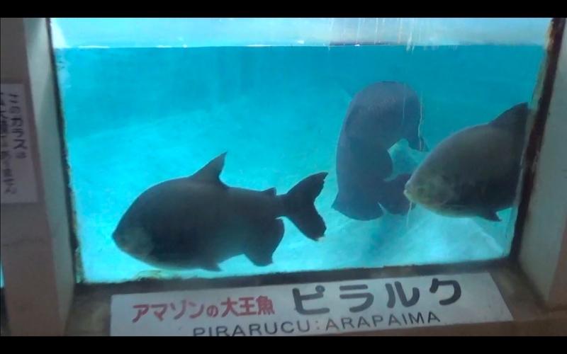 f:id:kimagure-hitoritabi:20210303123932j:plain