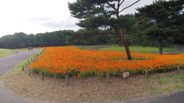 f:id:kimagure_tk:20211011085759j:image