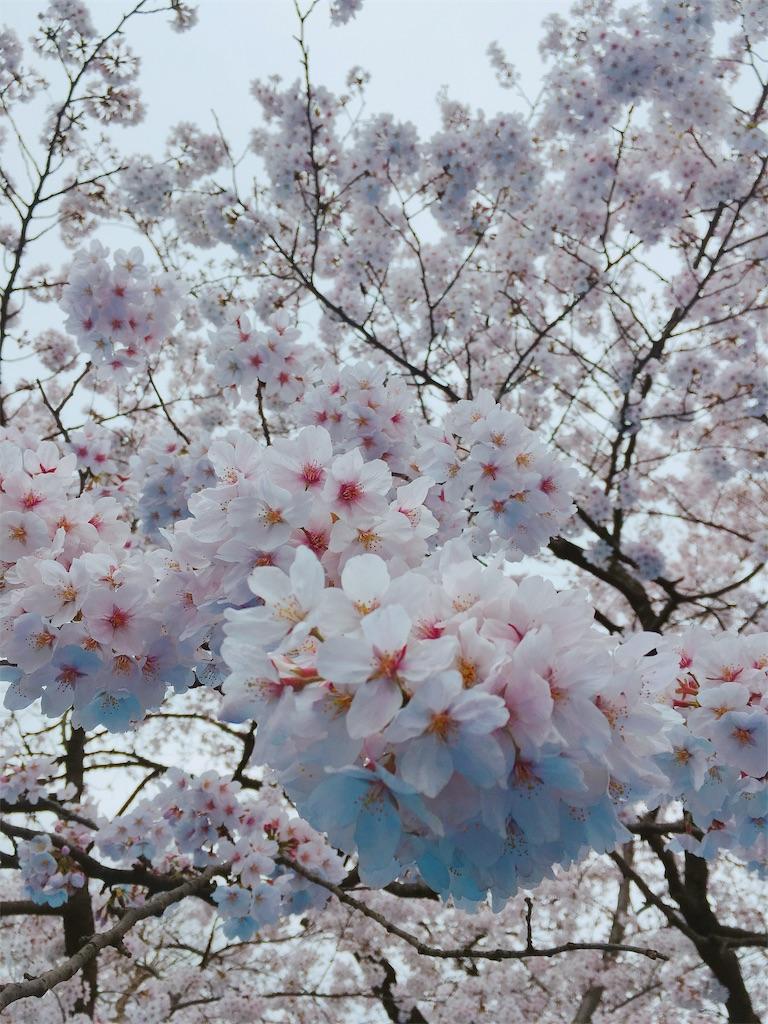 f:id:kimagureouji:20190403121500j:image