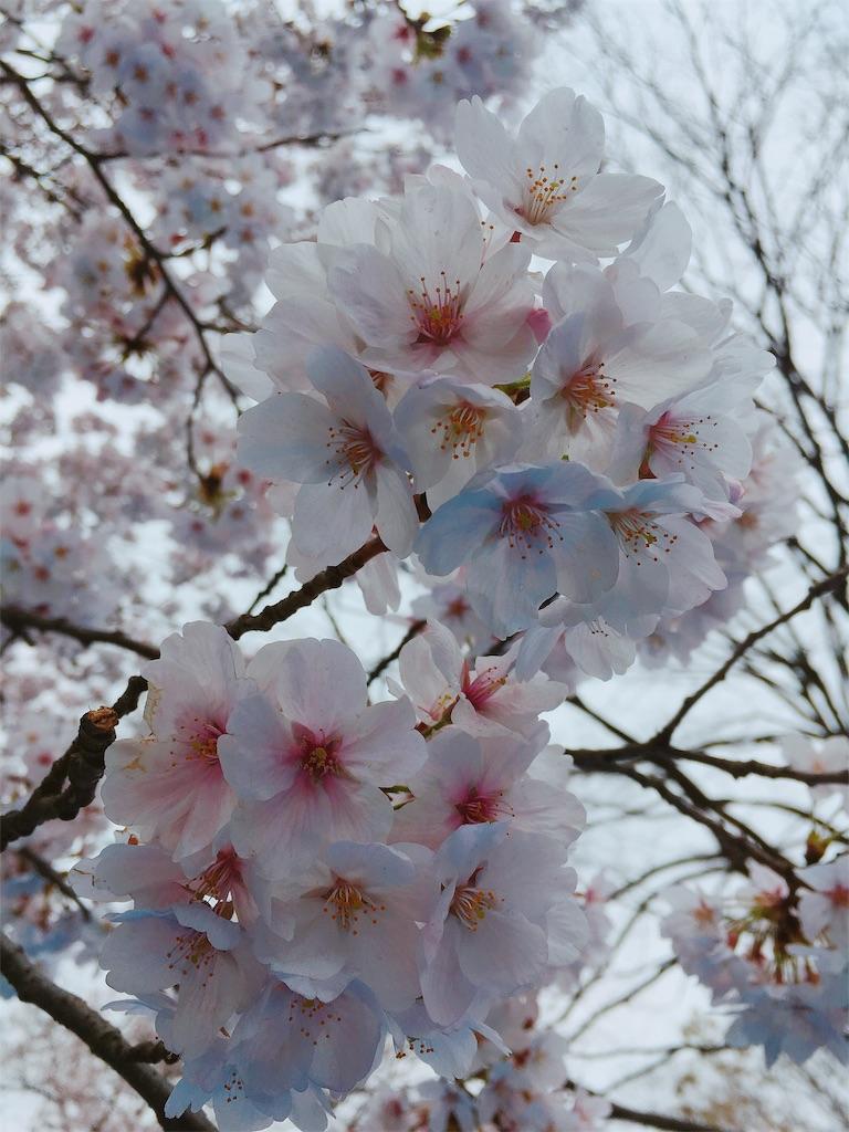 f:id:kimagureouji:20190403121747j:image