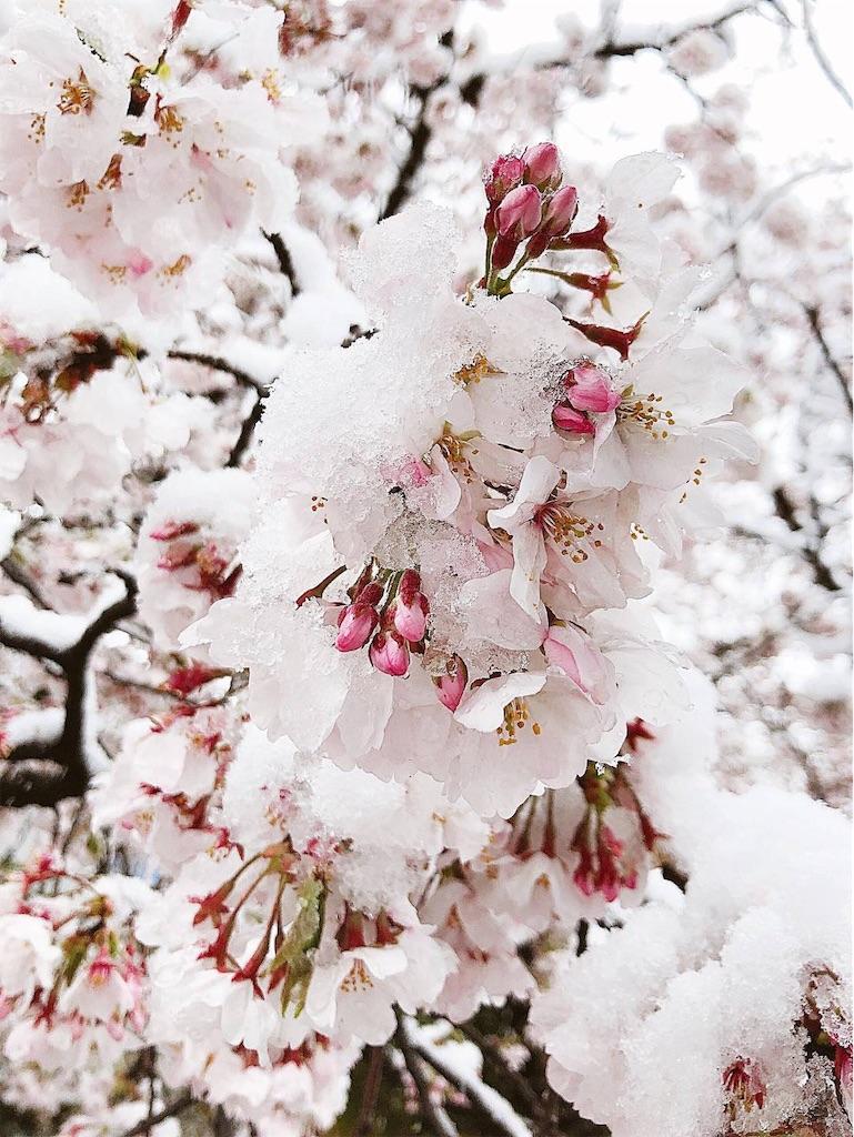 f:id:kimagureouji:20200403005152j:image