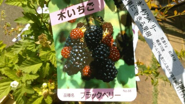 f:id:kimama2016:20170515012948j:image